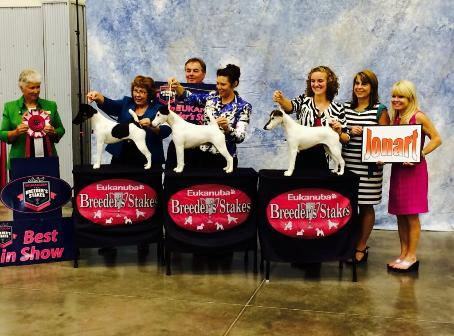 High Mtn Everso Smooth Fox Terriers- BIS Eukanuba Breeder's Sweepstakes